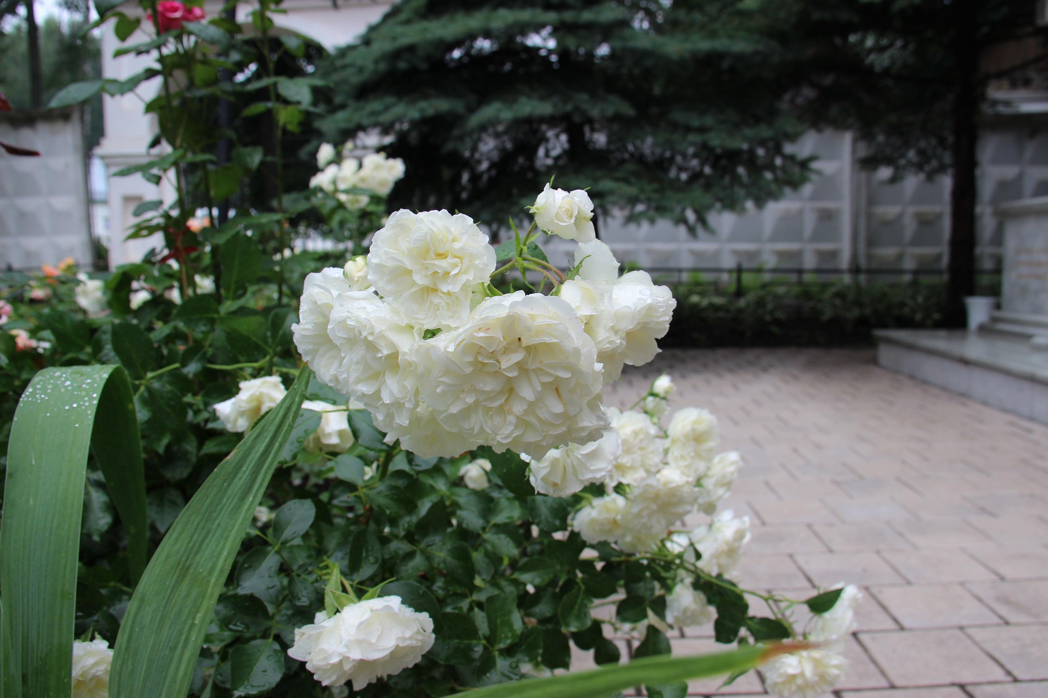 http://monuspen.ru/photoreports/63e9f01a87b40309900def101d755fi5.JPG